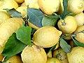 Lemons in Monterosso (773501964).jpg