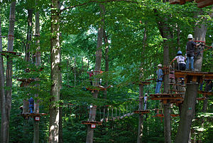 Ropes course - Adventure Park in a forest