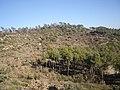 Les Vinyes de Vilamarí - panoramio.jpg