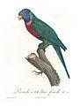 Levaillant Parrot 25.jpg