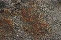 Lichen (35081724480).jpg