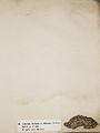 Lichenes Helvetici I II 1842 007.jpg
