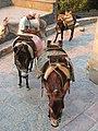 Lindos 851 07, Greece - panoramio (9).jpg