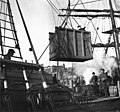 Loading a mule onto the deck of the schooner LUCILE, Seattle, February 15, 1898 (KIEHL 299).jpeg