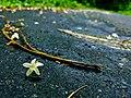 Lonely white flower.jpg