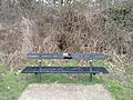 Long shot of the bench (OpenBenches 4335-1).jpg