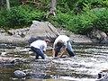 Looking for salamanders (6965098885).jpg