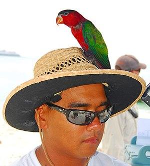 Sun hat - Image: Lorius hypoinochrous