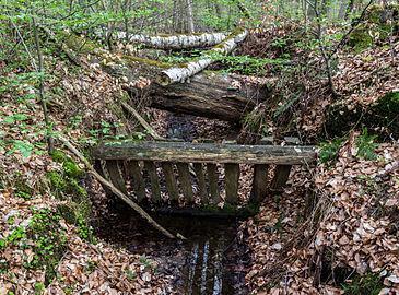 Münster, Wolbeck, Wolbecker Tiergarten, Naturwaldzelle -Teppes Viertel- -- 2014 -- 7092.jpg