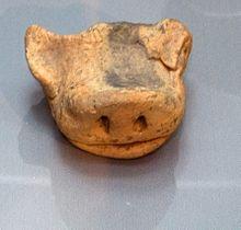 Hausschwein Wikipedia