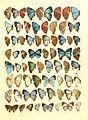 Macrolepidoptera15seit 0325.jpg