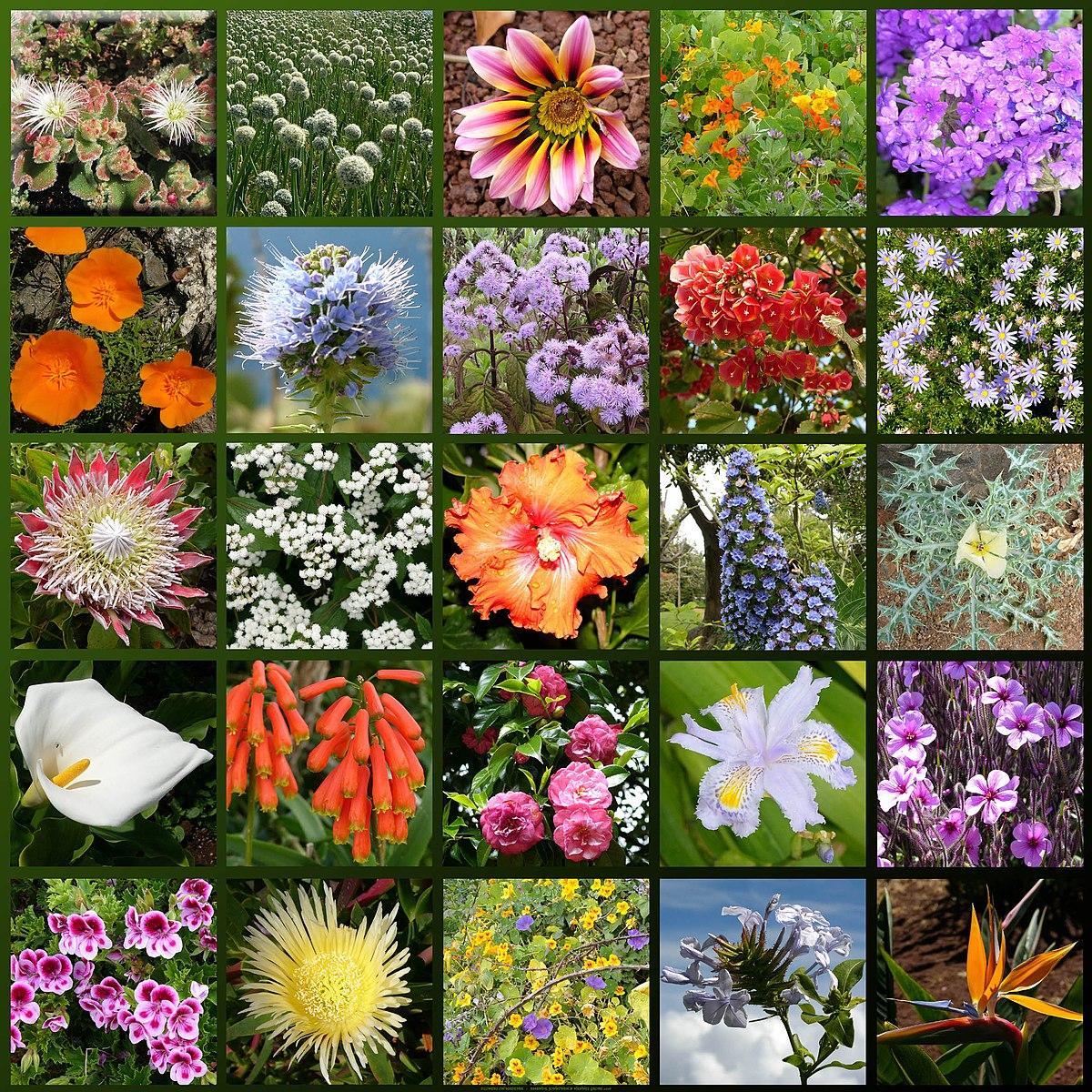 Floare Wikționar