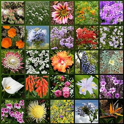Fiori wikizionario for Tipi di fiori