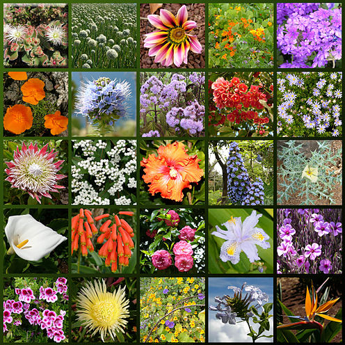 Floricultura wikipedia la enciclopedia libre for Plantas ornamentales wikipedia