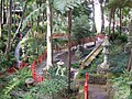 Madeira - Monte - Jardim Tropico (2093402912).jpg