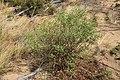Magnoliophyta sp. (32623071066).jpg