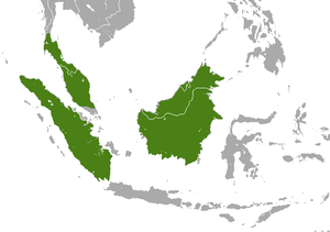 Malayan weasel - Image: Malayan Weasel area