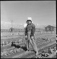 """Manzanar Relocation Center, Manzanar, California. Evacuee in her """"hobby garden"""" which rates highest . . . - NARA - 537983.tif"""