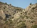 Maquis - panoramio.jpg