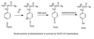 Phenylalanine hydroxylase - PAH mechanism, part II