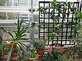 Mediterranean - US Botanic Gardens 38.jpg