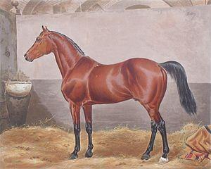 Melton (horse) - Melton by Eugene Tily