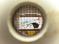 Millerbird in holding cage (6887488312).jpg