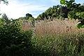 Moorwiesen bei den St.-Peter-Weihern-2.jpg