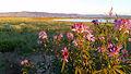 Mortenson Lake National Wildlife Refuge (19437187953).jpg