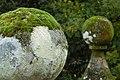 Moss planets (304369380).jpg