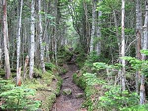 Honshū alpine conifer forests - Forest in the Okuchichibu Mountains.