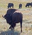 Mt Rushmore, Custer State Park 2006-09-04 (237341379).jpg