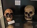Musée de Préhistoire de l'Université de Liège, crânes 2.jpg