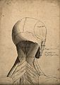 Muscles of the head and neck; écorch ́figure seen from Wellcome V0008279.jpg