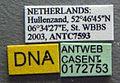 Myrmica lonae casent0172753 label 1.jpg