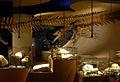 NHM Maastricht, 2011, Hadrosaurus02.jpg