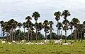 NP Llanos24 lo (5853385573).jpg