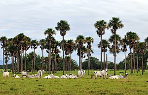 Los Llanos (South America) - Los Llanos in Colombia