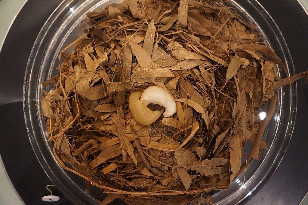 National Museum of Australia - Joy of Museums - Platypus Nest