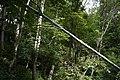 Natur um Wanderweg bei Mallnitz 20190819 005.jpg