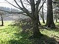 Natura - panoramio (5).jpg