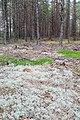 Nature reserve Bór Chrobotkowy.jpg