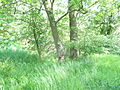 Naturschutzgebiet Heuckenlock 21.05.2014 27.JPG