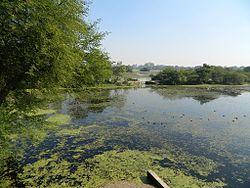 Nawabganj Bird Sanctuary, Unnao 03.JPG