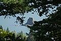 Near Washougal, WA, View of the Columbia River, 2008 - panoramio.jpg