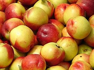 Nectarines; fruits of Prunus persica.