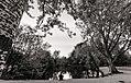 Nella solitudine del bosco.jpg