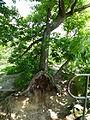 Neuer Wildenstein - Nationalpark Sächsische Schweiz 10.JPG