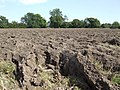 Newly ploughed - geograph.org.uk - 532760.jpg