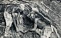 Northern Rhodesian Miners.jpg